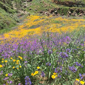 Walker Pass Bloom